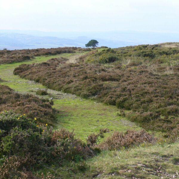 Moorland-Green