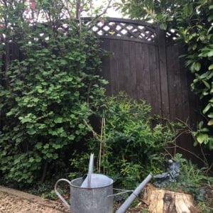 Thorndown-Blackthorn-Wood-Paint