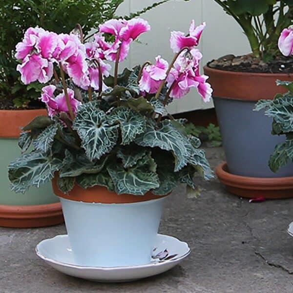 Thorndown-Skylark-Blue-terracotta-pot