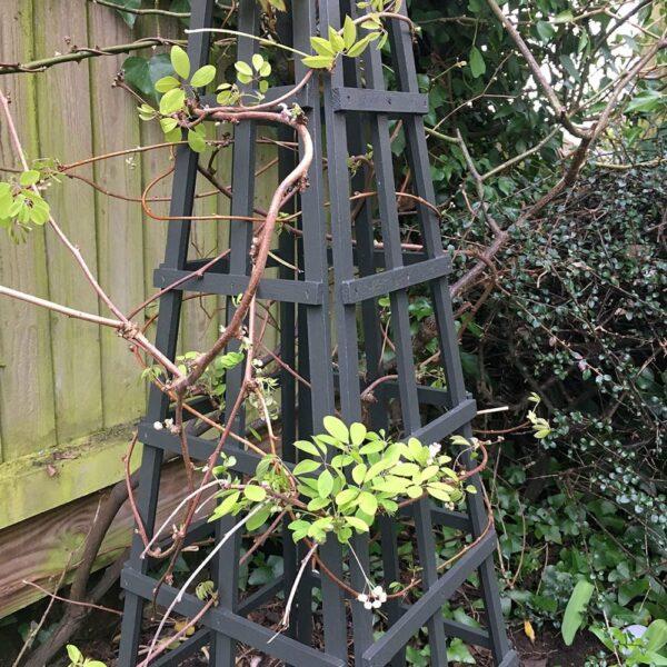 Thorndown-Yew-Green-Wood-Paint-on-obelisk