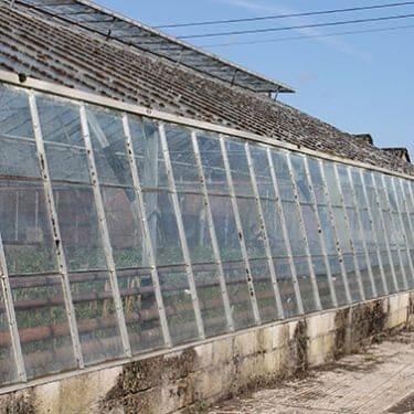 Floyds Nursery glasshouse external before