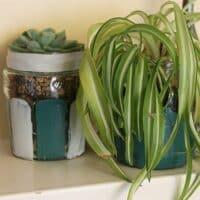 Thorndown-Peelable-Glass-Paint-plant-jam-jars