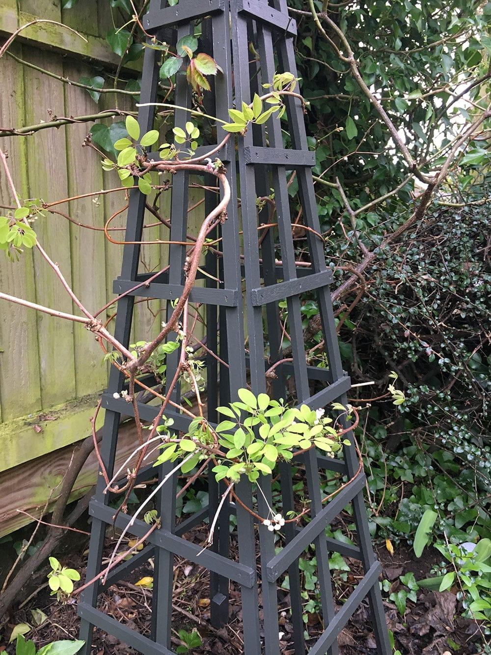 Yew-Green-Wood-Paint-on-obelisk