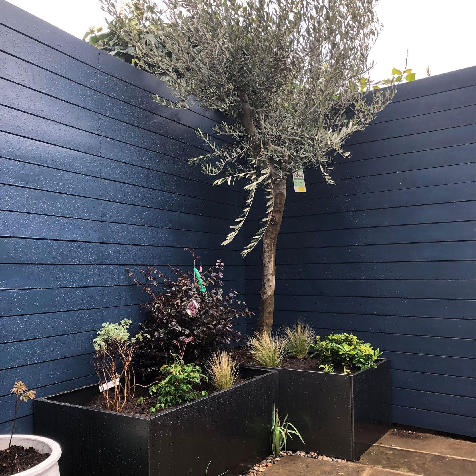 Bishop-Blue-fence-Bob-Richmond-Watson-Landscape-and-Garden-Design