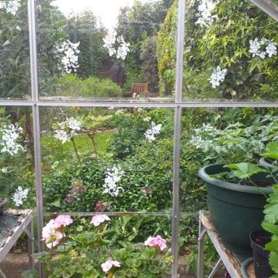 Stencilling-garden-greenhouse