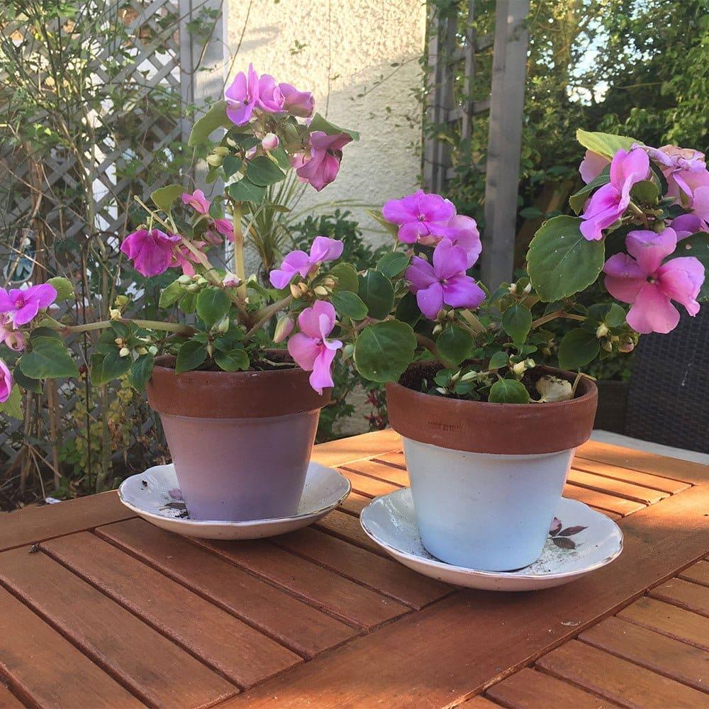 Rock-Rose-&-Skylark-Blue-wood-paint-on-terracotta-pots