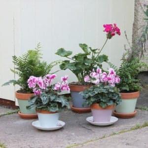 Thorndown Wood-Paint-on-Terracotta-Pots