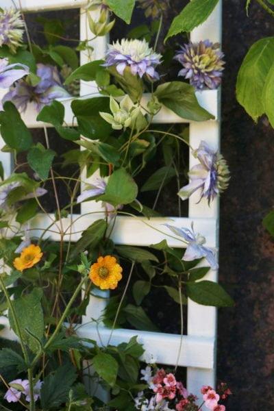 Thorndown-Green-Hairtreak-Wood-Paint-on-Hutton--small-trellis-planter