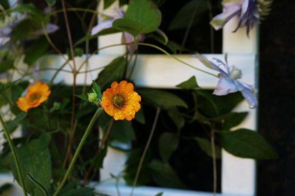 Thorndown-Green-Hairtreak-Wood-Paint-on-trellis-planter