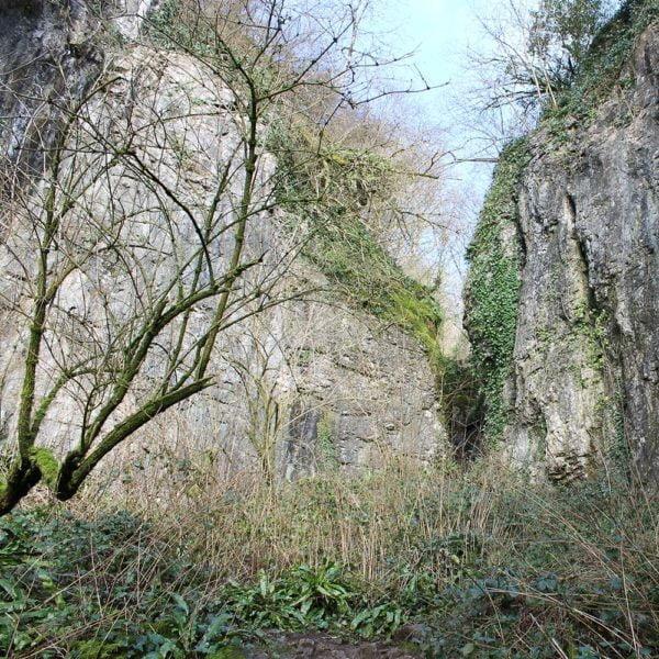 Thorndown-Ebbor-Stone-pic