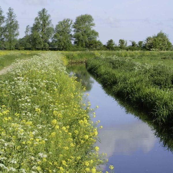 Thorndown-Rhyne-Green-pic